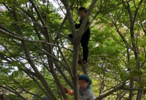 気に登る子どもたち